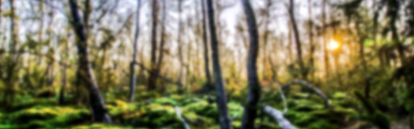 Heizöl Villingen-Schwenningen Headerbild