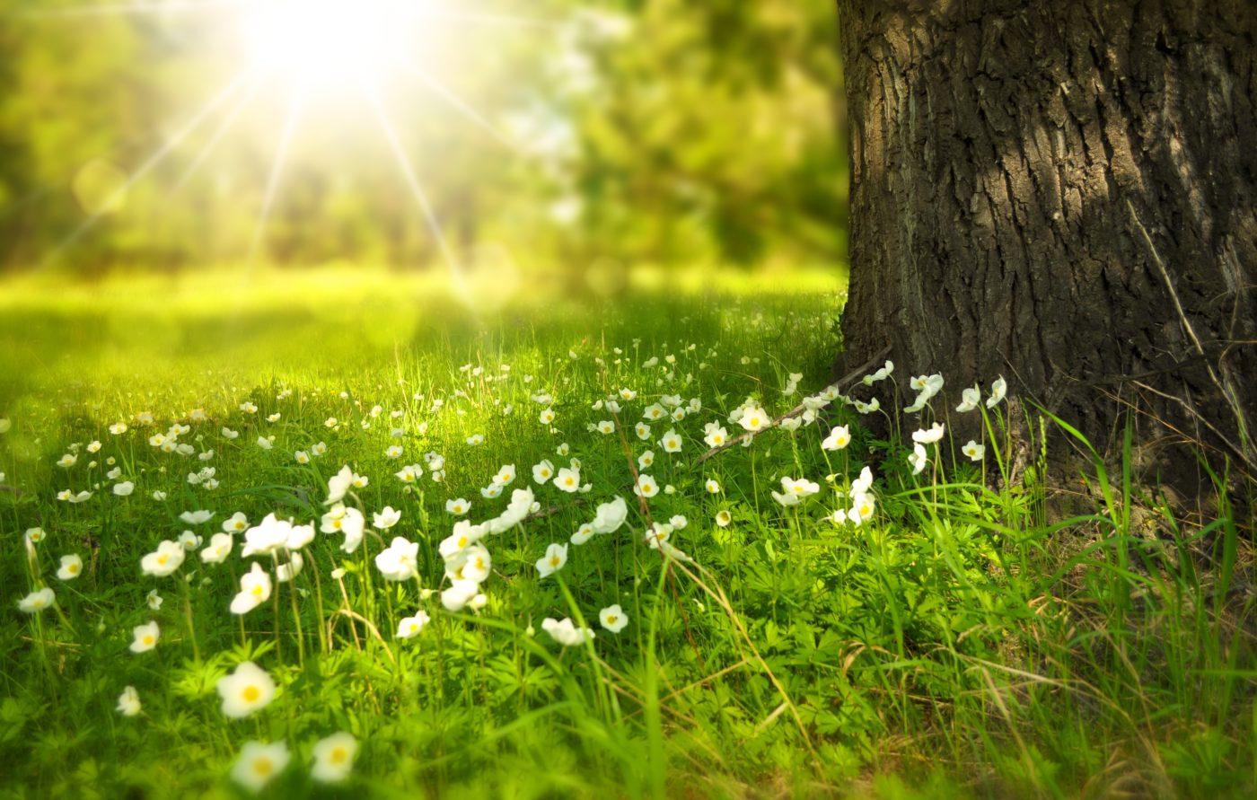 Blumenwiese » Wahr Energie